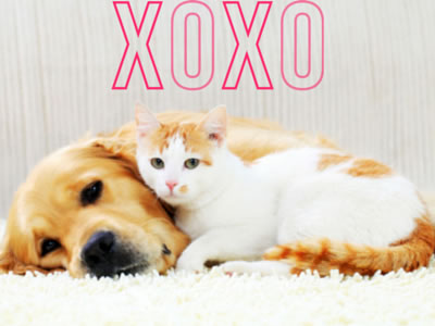image for Keeping Valentine's Day Safe for Your Pets